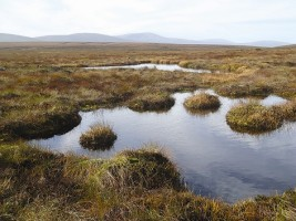 A bog landscape in Ireland, photograph provided by IPCC