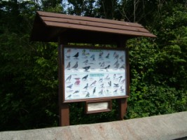 A community encourages people to identify local birds
