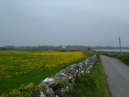 Countryside in South Co. Galway
